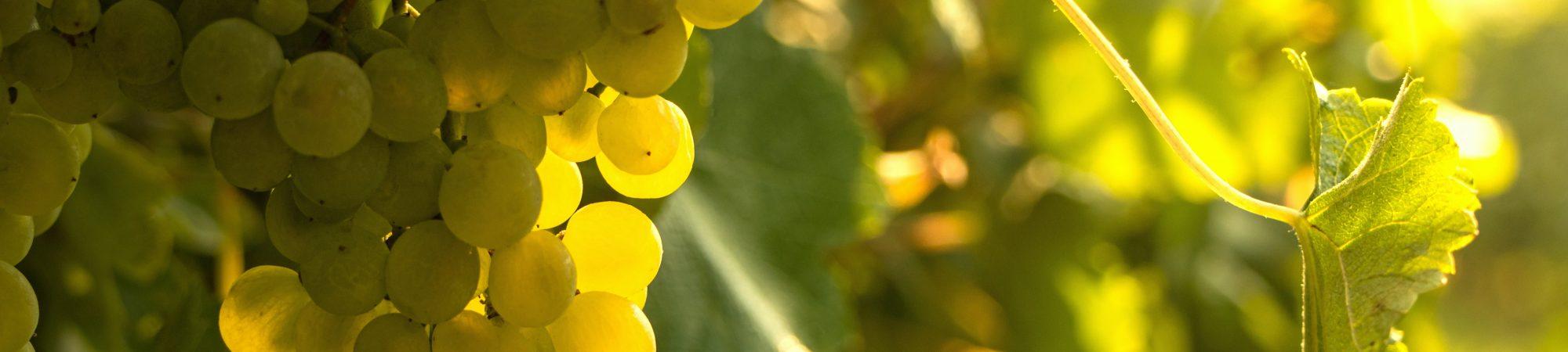 pexels Ⓒ marc-winter - Salon du Vin Bio